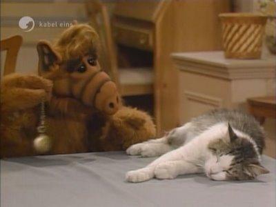 Alf gato Suertudo Lucky grande