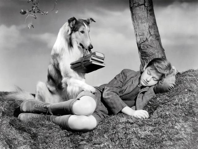 Lassie con su pequeño amo