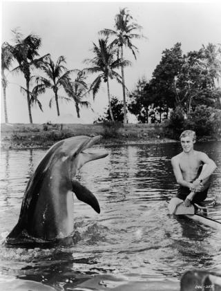 imagen de la serie Flipper sobre un delfín